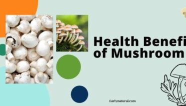 How to Maintain Good Health With the Mushrooms