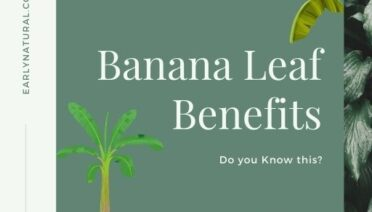 Do You Know this Banana Leaf Benefits