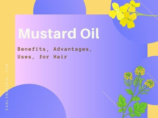 Mustard Oil Benefits, Uses, for Hair, and Advantages